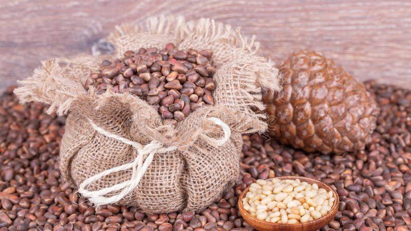 Полезные свойства кедровых орехов для здоровья