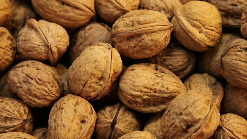 Чем полезен и вреден грецкий орех для человека